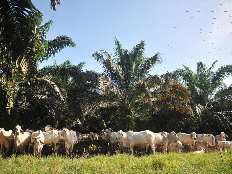 Kinabalu Beef